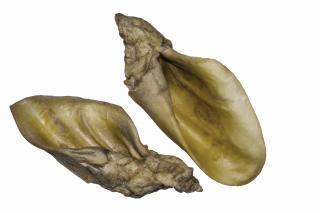 Вухо яловиче кальциноване, 1 шт
